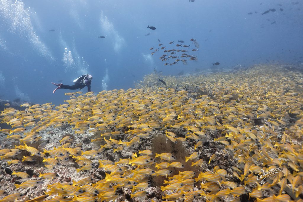 There is still so much mystery surrounding the underwater world