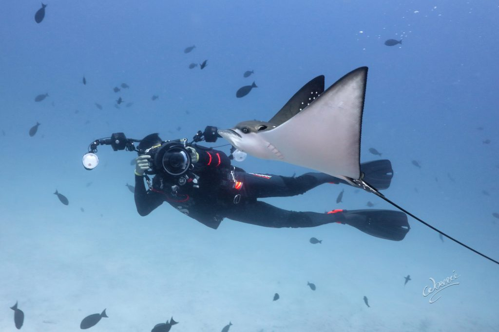 Jan Acosta (one of the co-founders of Studio H20) with eagle ray