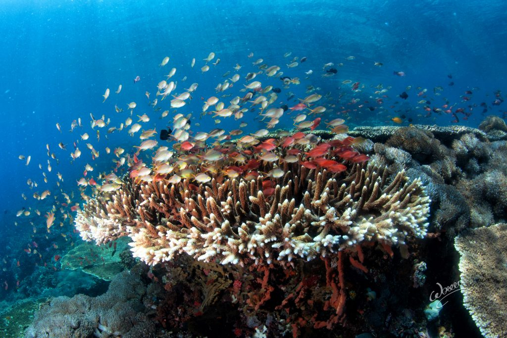 One simply needs to witness the underwater world to understand what needs to be done to preserve it